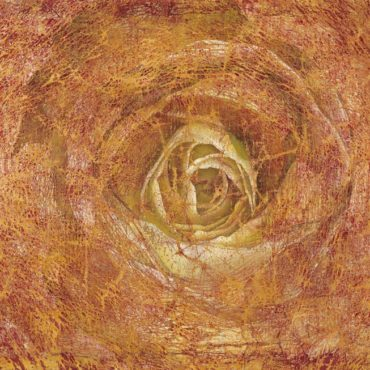 Rosa 80×120